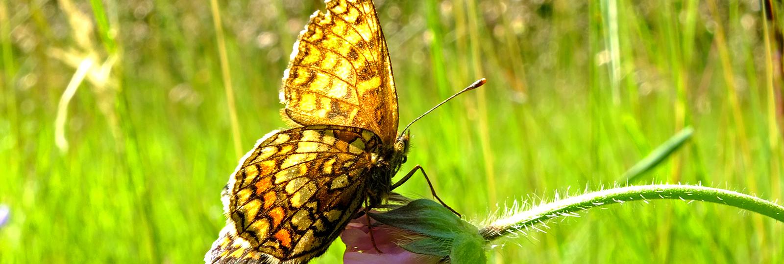 Schmetterling, Bildquelle