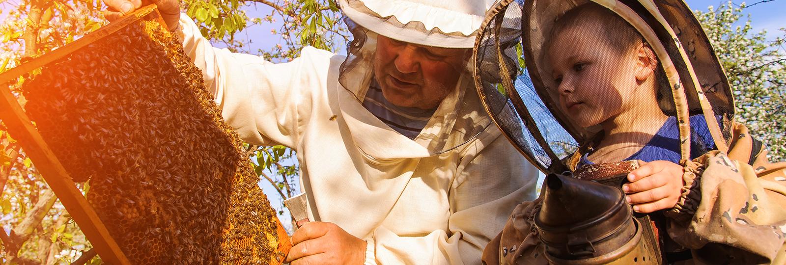 Imker und Kind betrachten eine Honigwabe voller Bienen