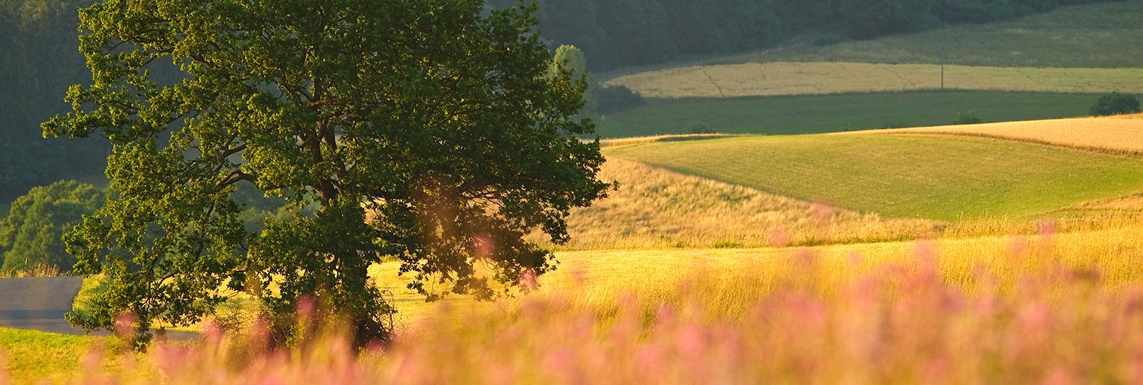 Baum inmitten von Feldern