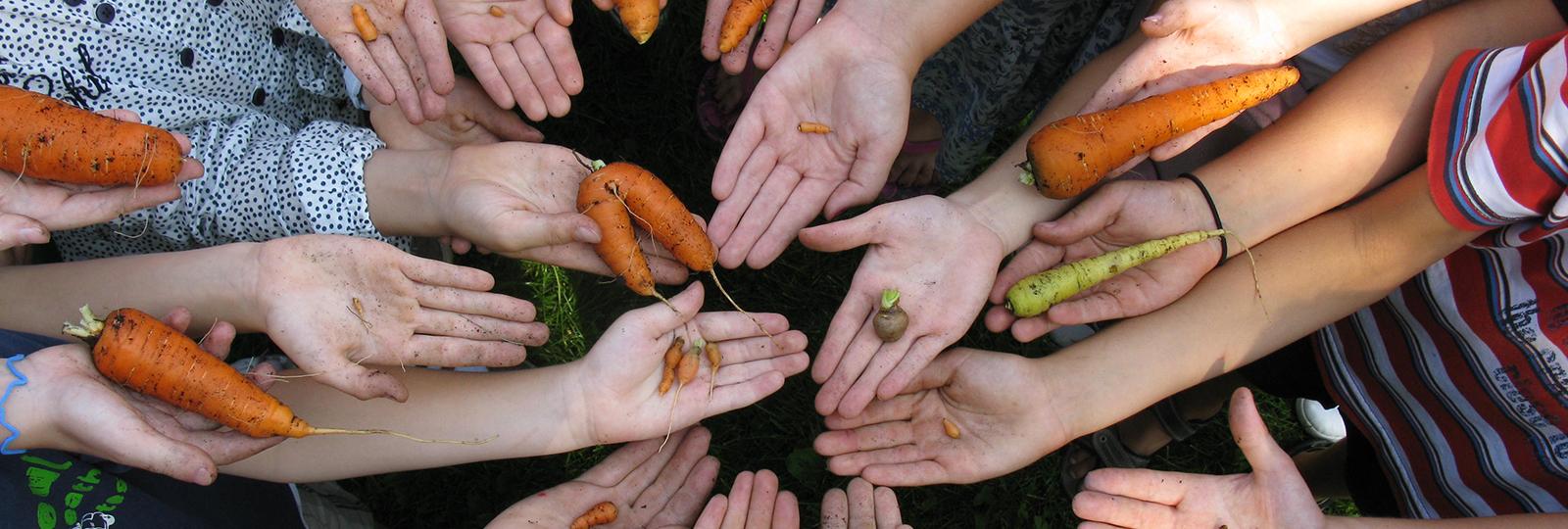 Möhren auf Handinnenflächen von Kindern