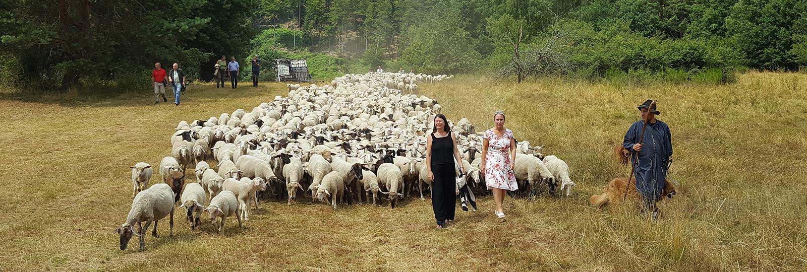 Umweltministerin Höfken unterwegs mit einer Schafherde