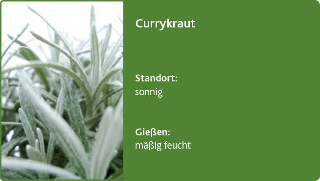 Currykraut