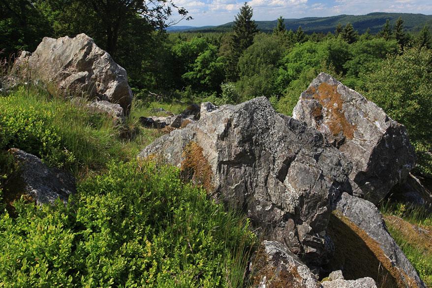 Nationalpark Hunsrück-Hochwald, Foto: Nationalpark Hunsrück-Hochwald/Konrad Funk