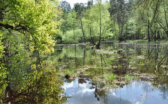 Kallbachsee im Bienwald